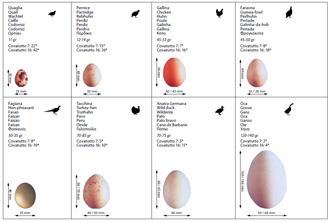 detalle-huevos-peq